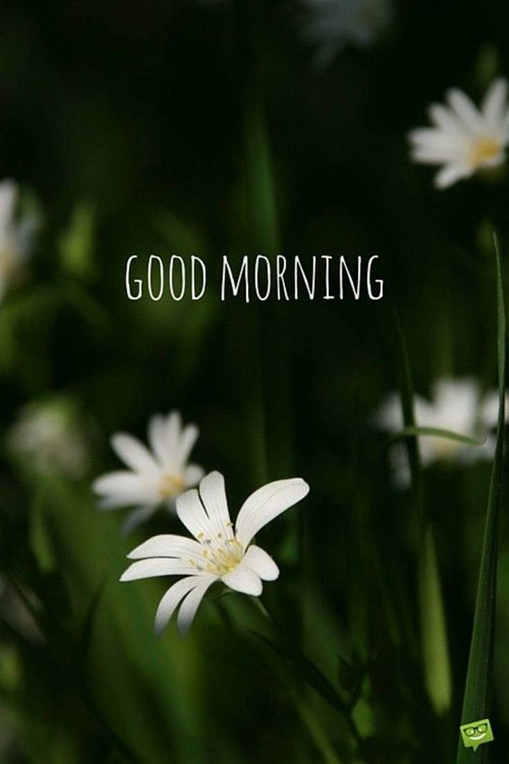Good Morning images with white Flowers images