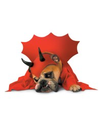 Red Devil Dog Costume : Devil Hallowen Costume For Dogs