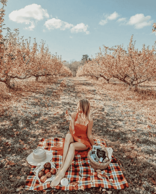 @the_essentialist_ - a woman enjoys a picnic in the groves