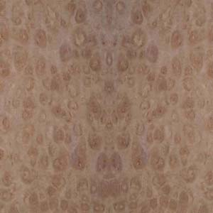 eucalyptus-pom-4