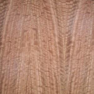 eucalyptus-qtr-fig-2