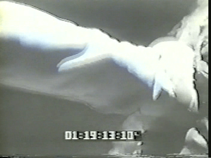 vlcsnap-2019-08-12-19h35m37s154