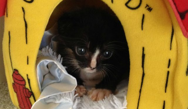 Meet the 29 Cutest Patients in This 24 Hour #Kitten Nursery!