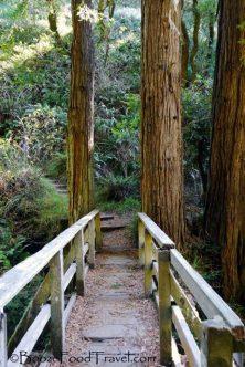 redwood-bridge