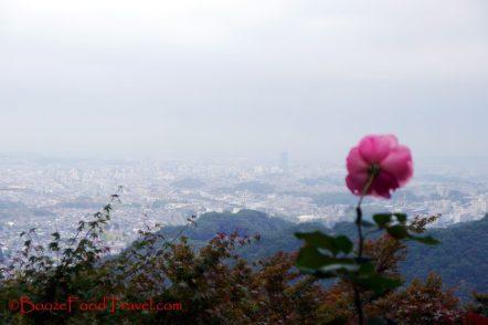 takao-flower-view