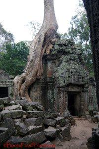 ta-prohm-tree2