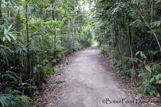 The forest trail through MacRitchie Reservoir