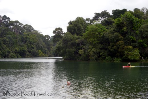 macritchie-reservoir1