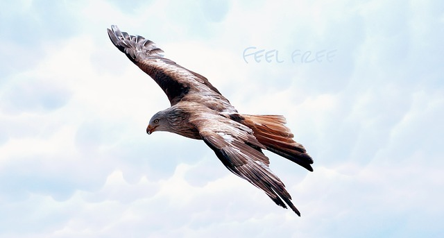 An Eagle flying, inspiration for feeling a Natural High
