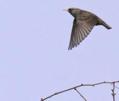 Flying bird, inspiration for not drinking