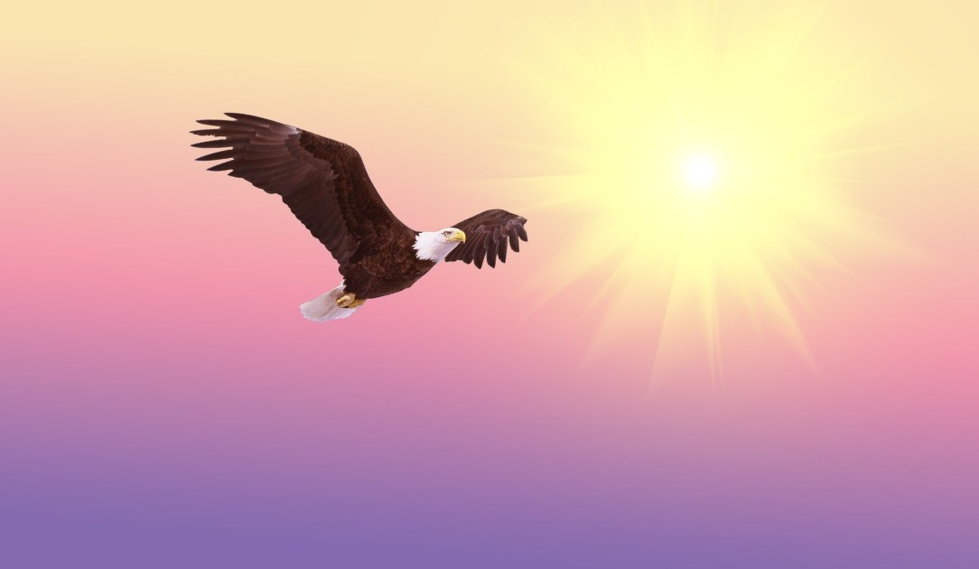 Eagle flying Free -Feeling Alcohol-Free