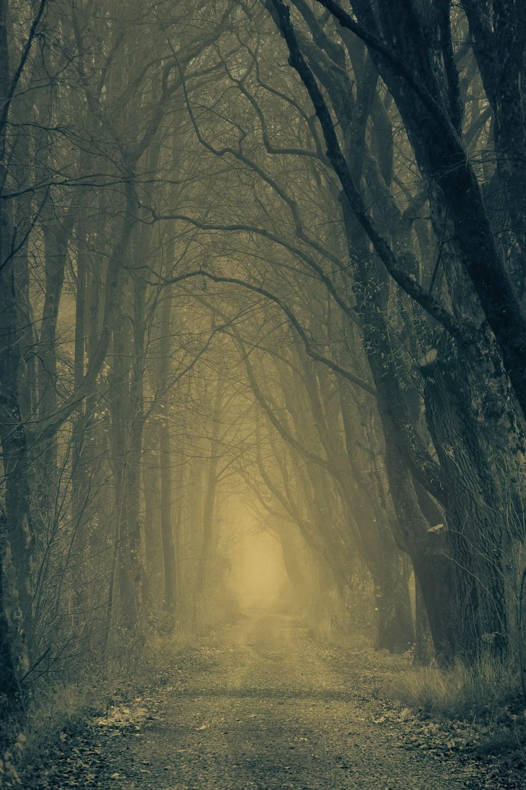 Nightmare Forest