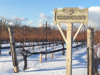Chardonnay vines in the snow
