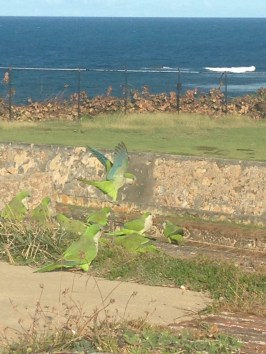 Parrots at San Cristobal Fort