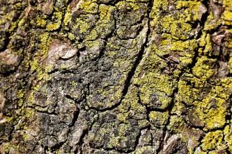 texture-bark-1crop_potpis_scale