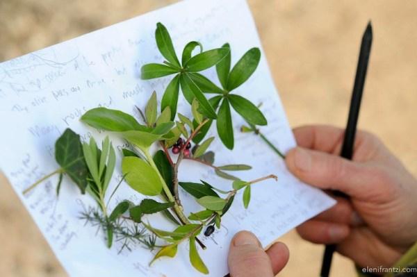 corso di permacultura e alberi da frutto, permaculture & food forest