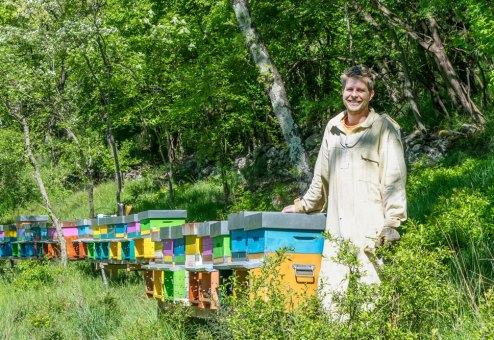 api del carso