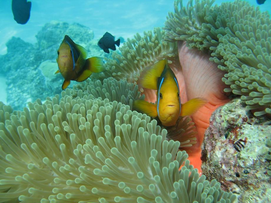 Nemo Snorkeling Bora Bora