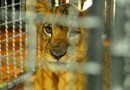 WTTC release key guidelines for Travel & Tourism businesses to advance the prevention of illegal wildlife trade