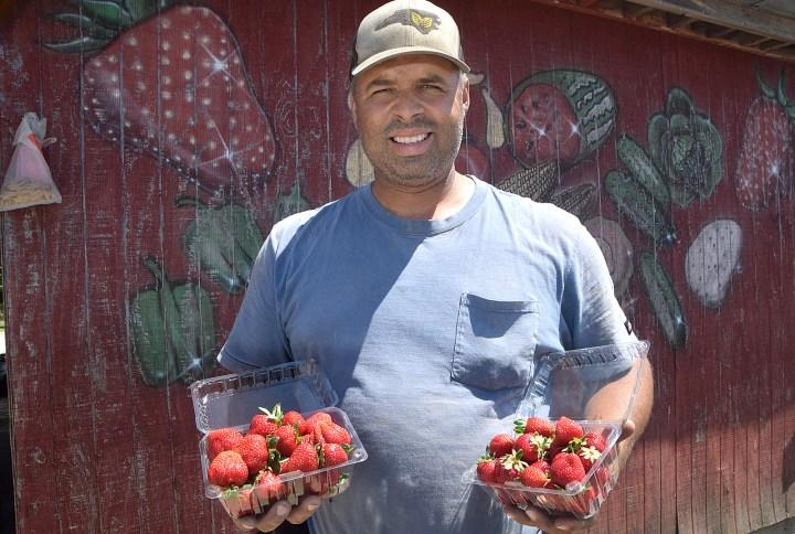 strawberries Pembroke