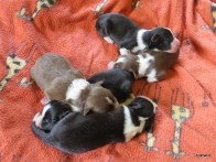 girls 1 day old
