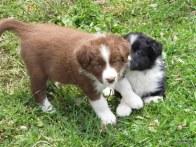 Bo and lola
