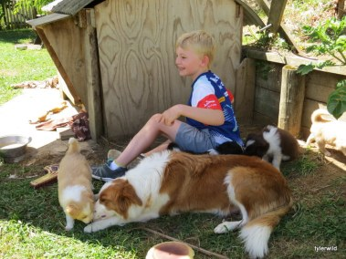 Connor enjoying the pups
