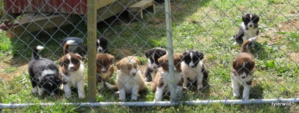 the gang at 7wks