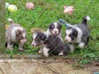 wet pups