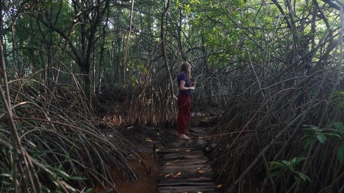 Mangrove Forest, Unawatuna