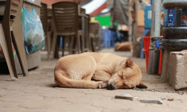 Perros callejeros: denuncian que cada vez más municipios autorizan matanzas