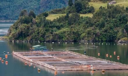 Tierra del fuego prohibió por ley la cría de salmones