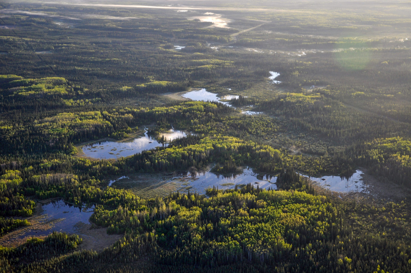 More than 208 billion tons of carbon are stored in the boreal's trees, soils. Ducks Unlimited Canada National Boreal Program Ecosystem Services Ducks Unlimited Canada National Boreal Program
