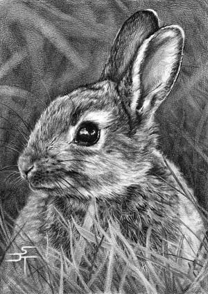 pencil drawings animal realistic draw