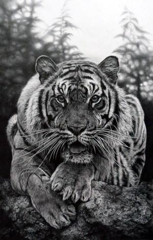 pencil realistic animal drawings pencils