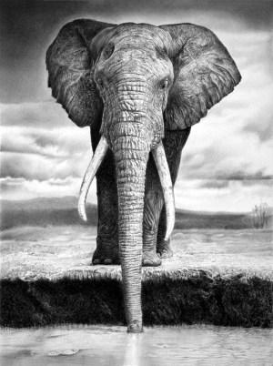 pencil animal drawings realistic