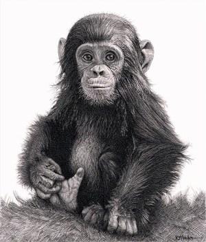 realistic pencil drawings animal drawing shading