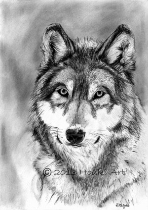 pencil realistic drawings animal wolf drawing animals wild portrait wolves 3d sketches draw charcoal von dog 8x12 painting clip printable