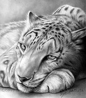 pencil realistic animal drawings drawing shading using