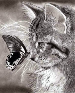 realistic pencil animal drawings easy pencils