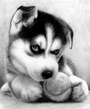 realistic pencil drawings animal easy pencils different