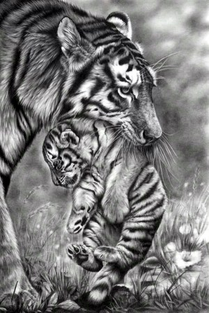 pencil drawings animal realistic draw artists pencils
