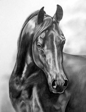 pencil drawings horse realistic animal drawing animals horses arabian boredart artwork sketches sketch amazing charcoal pencils head paintings equine colored