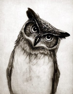 pencil realistic animal drawings awesome