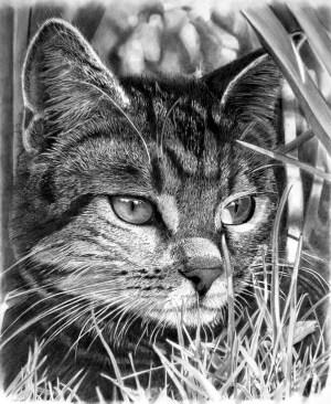 pencil drawings realistic animal