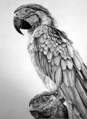 pencil animal drawings realistic drawing still birds looking