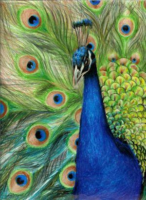 pencil colored drawing drawings peacock pencils colour sketch bird amazing coloured painting imagination those deviantart draw artwork birds colorful boredart