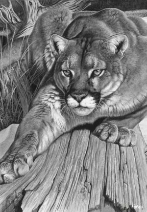 realistic drawings drawing pencil animals animal painting diamond mountain lion wildlife 5d stitch cross raving diy leopard embroidery square mosaic