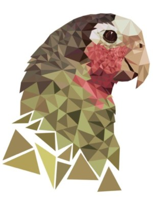 geometric animal shapes drawing triangles nature animals drawings bird birds illustrations using behance illustration graphic parrot shape via designs assignment