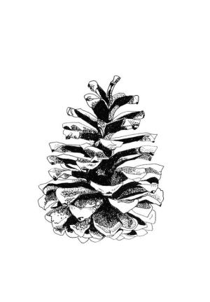 drawing cone pine drawings stipple line simple ink pinecone stippling sketch intense painting yet pen sketches texture christmas help nature